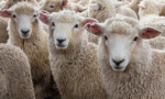 Wool Applique Kits